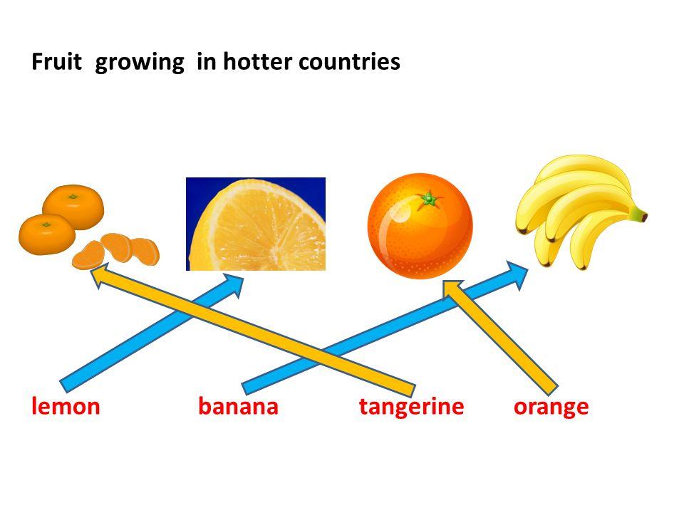 Fruit growing in hotter countries lemon banana tangerine orange