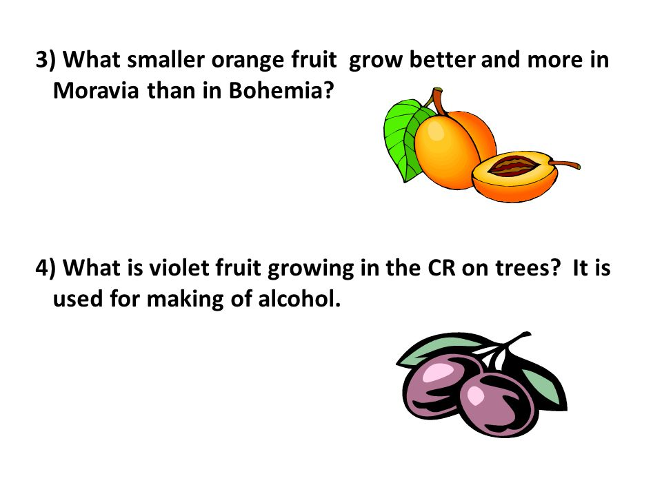 3) What smaller orange fruit grow better and more in Moravia than in Bohemia.