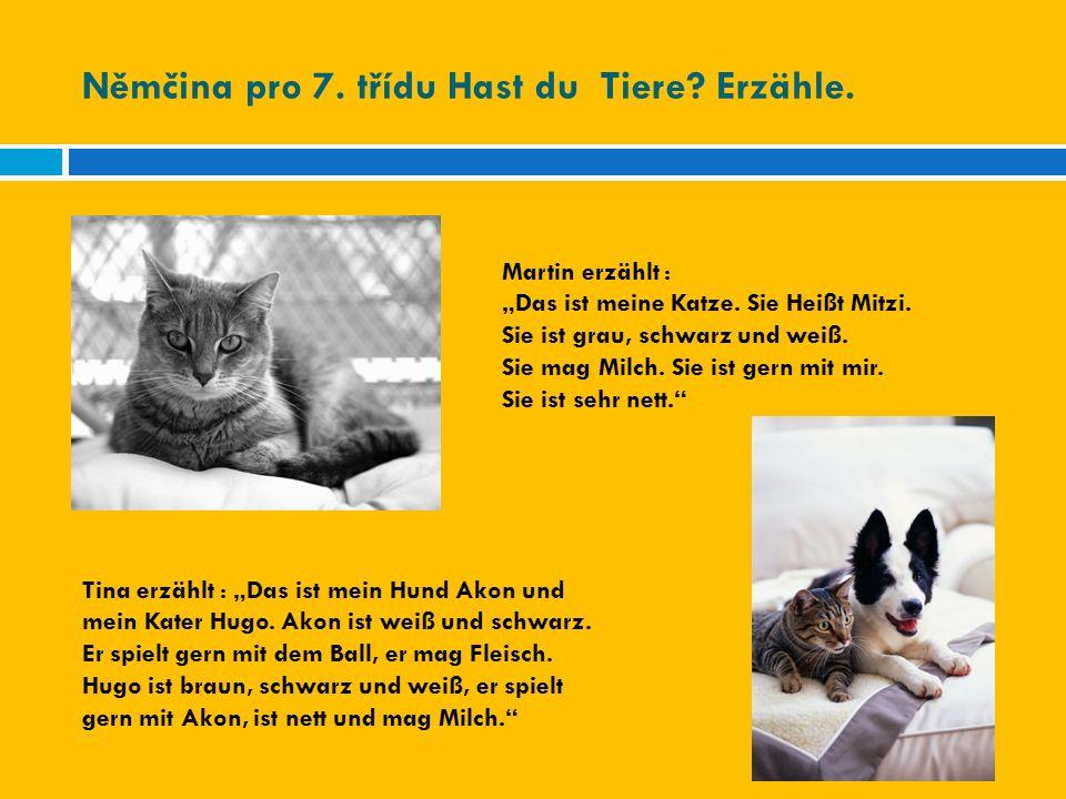 """Němčina pro 7. třídu Hast du Tiere? Erzähle. Martin erzählt : """"Das ist meine Katze. Sie Heißt Mitzi. Sie ist grau, schwarz und weiß. Sie mag Milch. Si"""