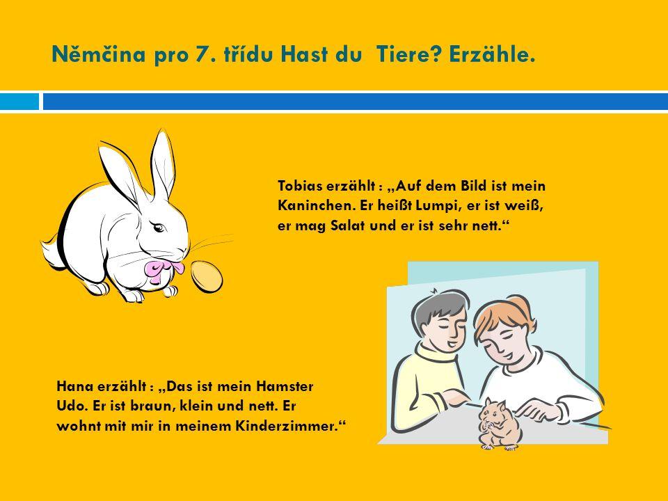 """Němčina pro 7. třídu Hast du Tiere? Erzähle. Tobias erzählt : """"Auf dem Bild ist mein Kaninchen. Er heißt Lumpi, er ist weiß, er mag Salat und er ist s"""