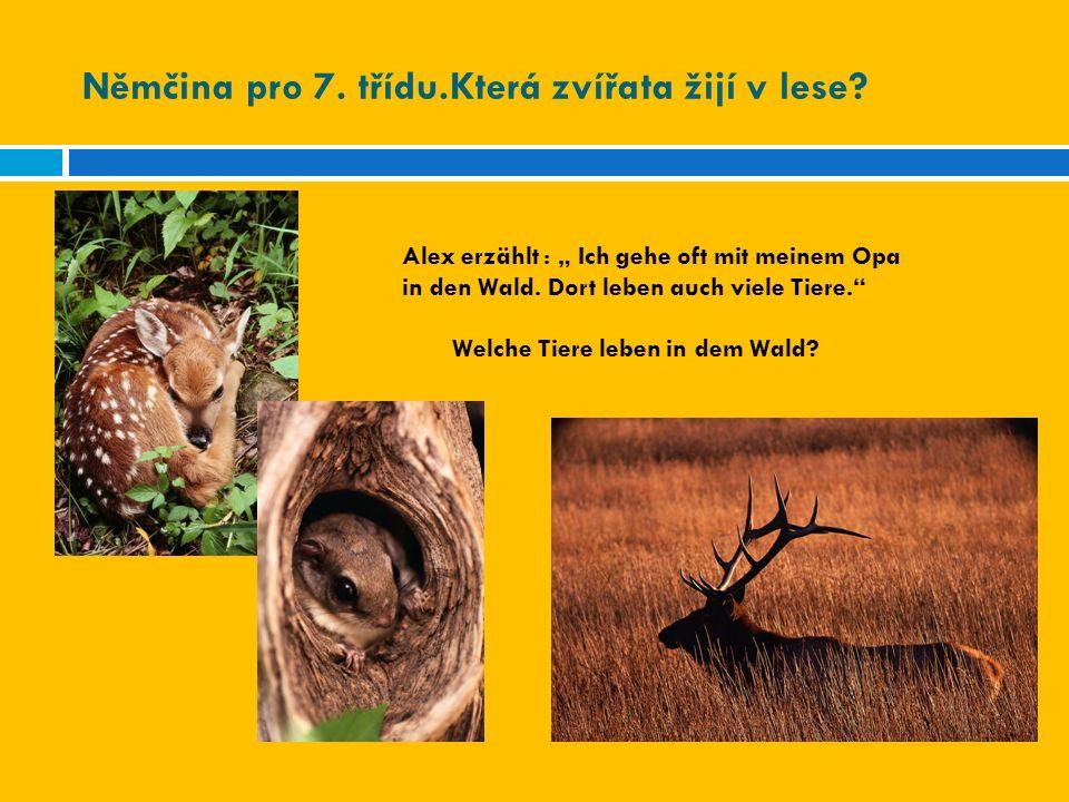 """Němčina pro 7. třídu.Která zvířata žijí v lese? Alex erzählt : """" Ich gehe oft mit meinem Opa in den Wald. Dort leben auch viele Tiere."""" Welche Tiere l"""