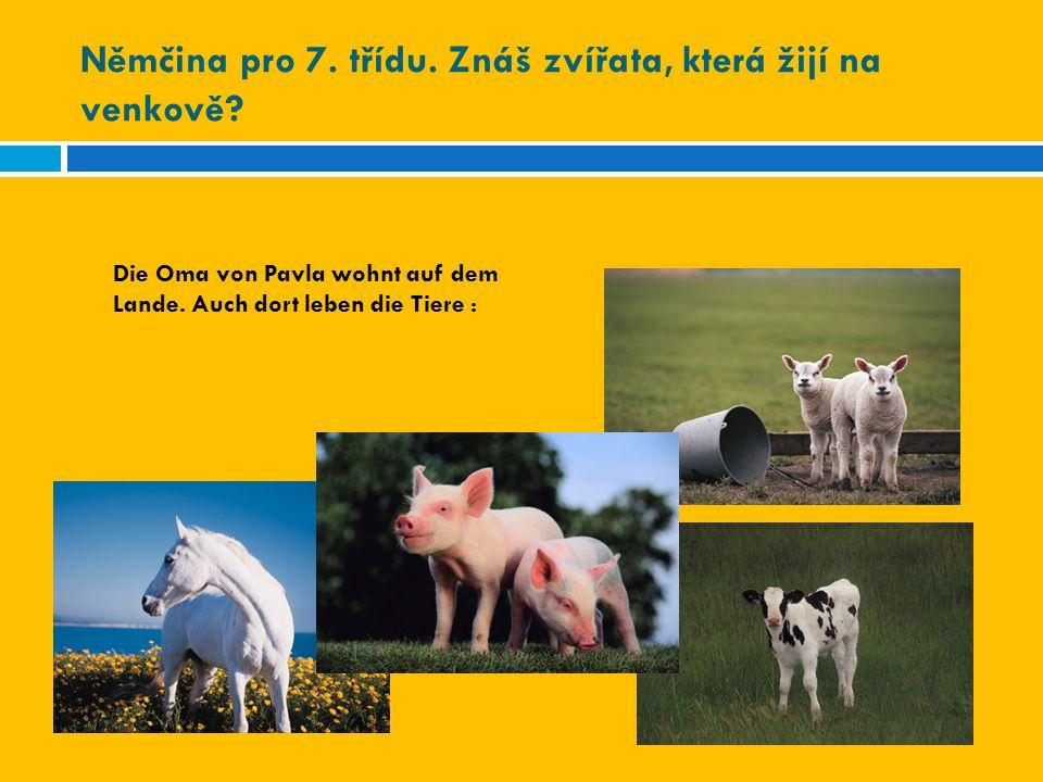 Němčina pro 7. třídu. Znáš zvířata, která žijí na venkově? Die Oma von Pavla wohnt auf dem Lande. Auch dort leben die Tiere :
