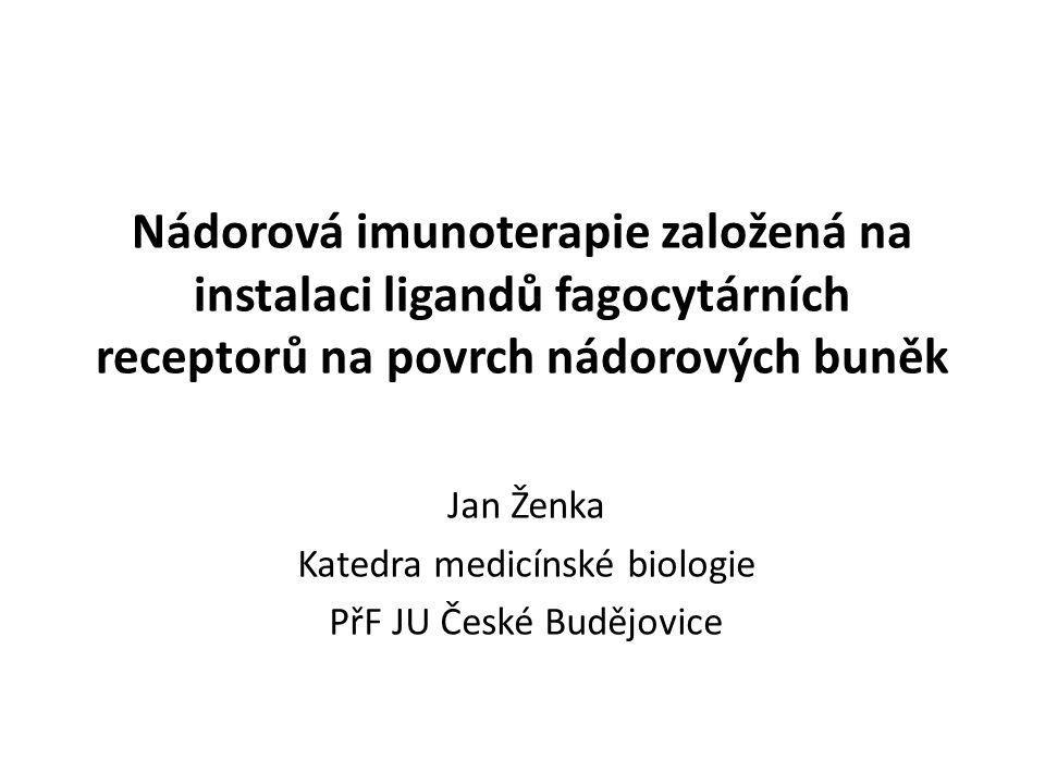 Nádorová imunoterapie založená na instalaci ligandů fagocytárních receptorů na povrch nádorových buněk Jan Ženka Katedra medicínské biologie PřF JU České Budějovice