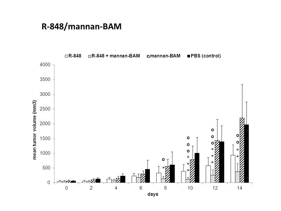 R-848/mannan-BAM