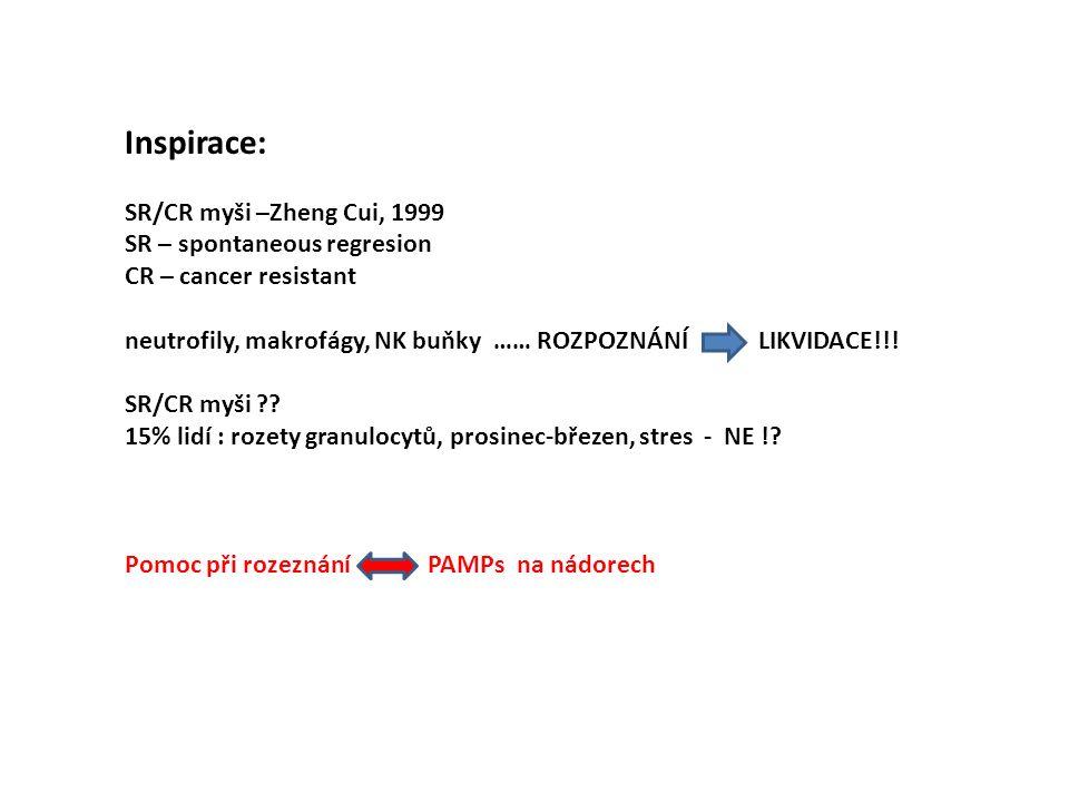 Inspirace: SR/CR myši –Zheng Cui, 1999 SR – spontaneous regresion CR – cancer resistant neutrofily, makrofágy, NK buňky …… ROZPOZNÁNÍ LIKVIDACE!!.