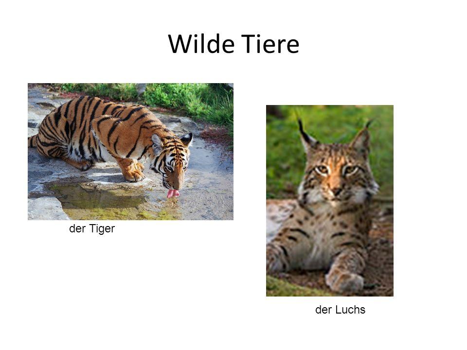 Wilde Tiere der Tiger der Luchs