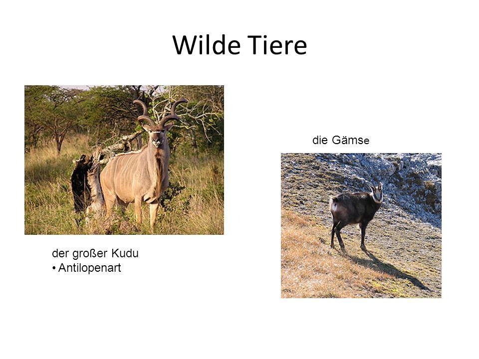 Wilde Tiere der großer Kudu Antilopenart die Gäms e