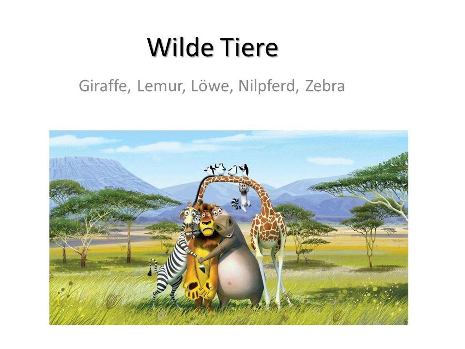 Wilde Tiere Giraffe, Lemur, Löwe, Nilpferd, Zebra