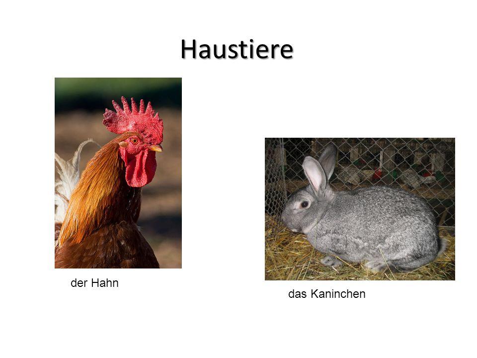 Haustiere der Hahn das Kaninchen
