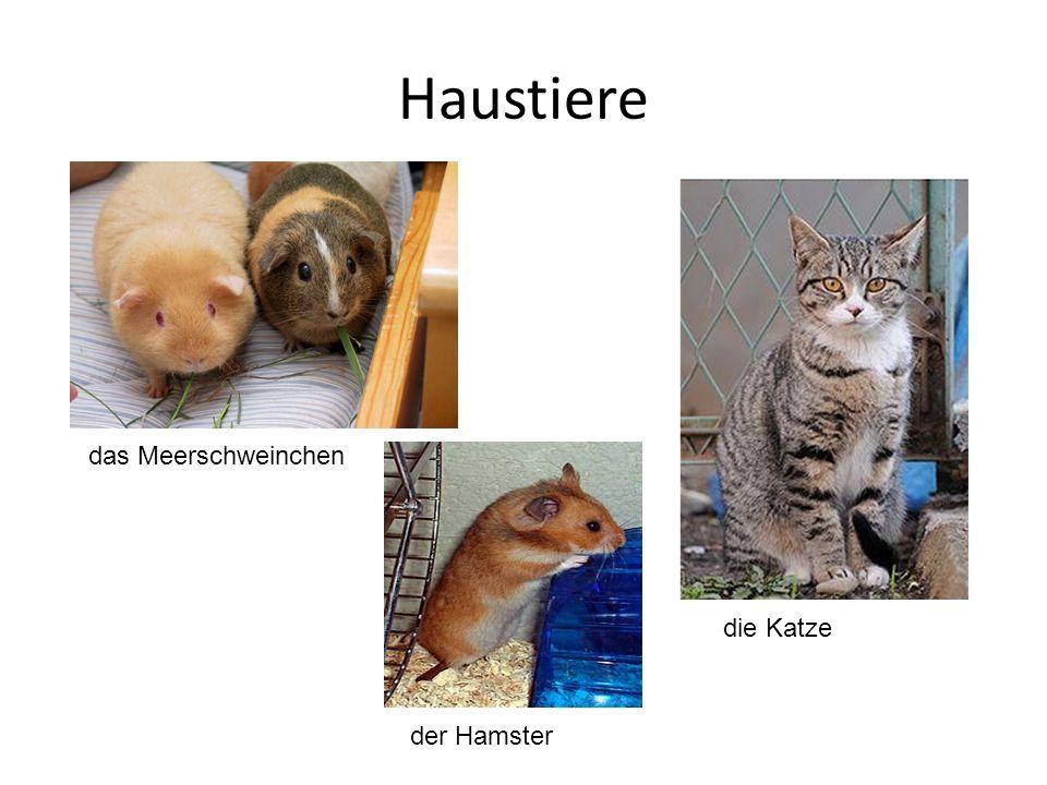 Haustiere das Meerschweinchen der Hamster die Katze