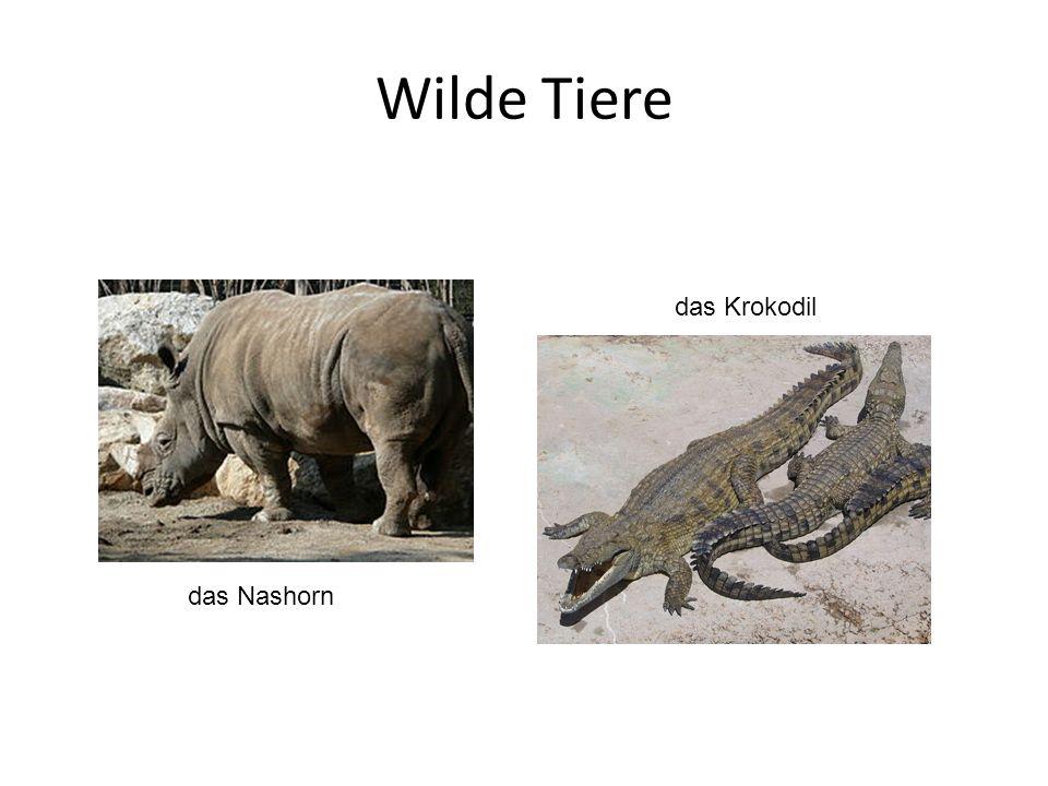 Wilde Tiere das Nashorn das Krokodil