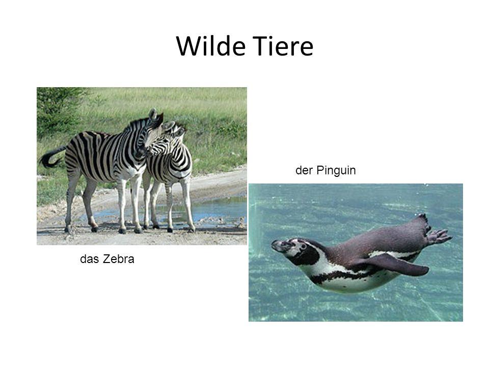 Wilde Tiere das Zebra der Pinguin