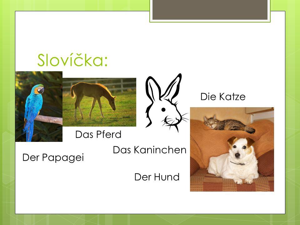 Slovíčka: Der Papagei Das Pferd Das Kaninchen Der Hund Die Katze