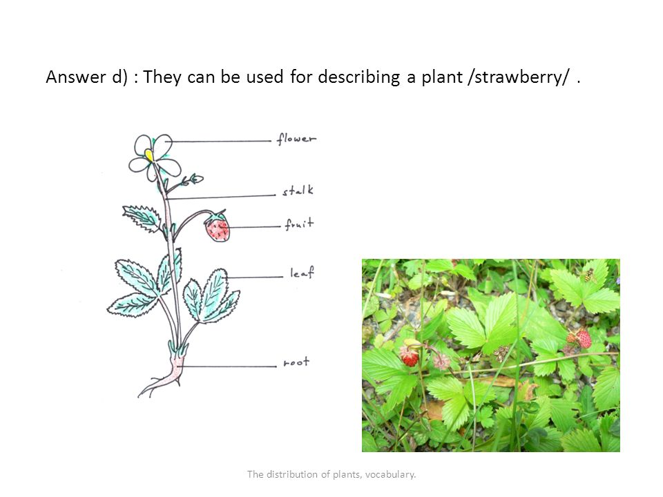Answer d) : They can be used for describing a plant /strawberry/.