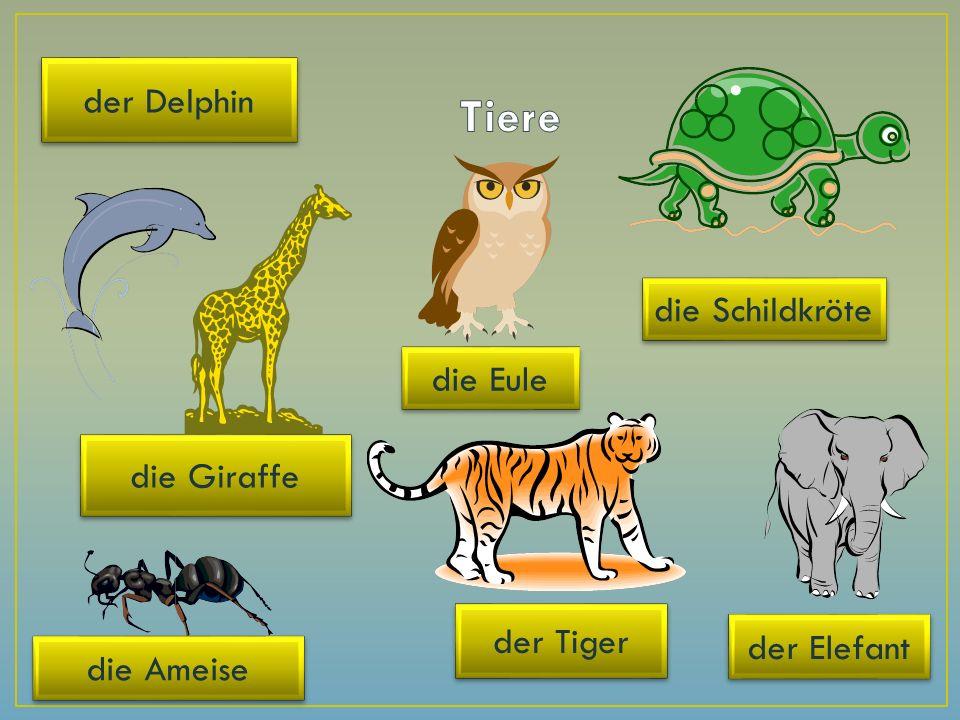 die Giraffe der Elefant der Tiger die Schildkröte die Ameise die Eule der Delphin