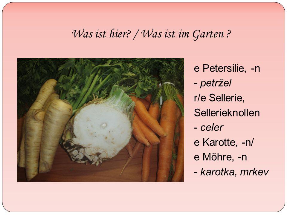 Was ist hier? / Was ist im Garten ? e Petersilie, -n - petržel r/e Sellerie, Sellerieknollen - celer e Karotte, -n/ e Möhre, -n - karotka, mrkev