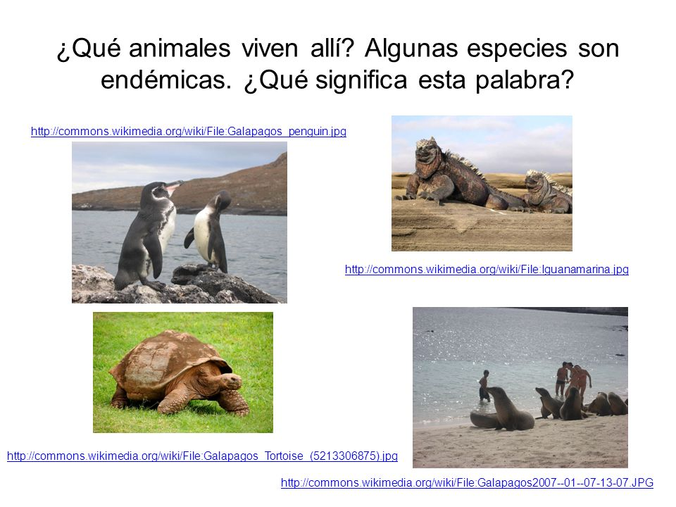 ¿Qué animales viven allí? Algunas especies son endémicas. ¿Qué significa esta palabra? http://commons.wikimedia.org/wiki/File:Galapagos2007--01--07-13