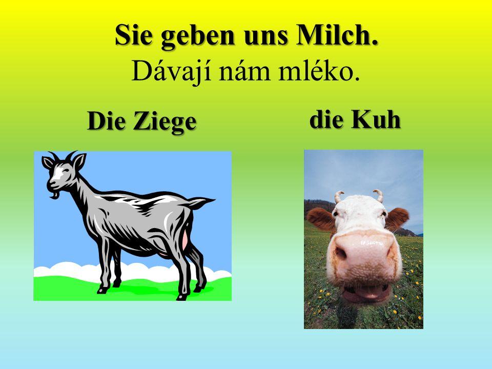 Sie geben uns Milch. Sie geben uns Milch. Dávají nám mléko. Die Ziege die Kuh
