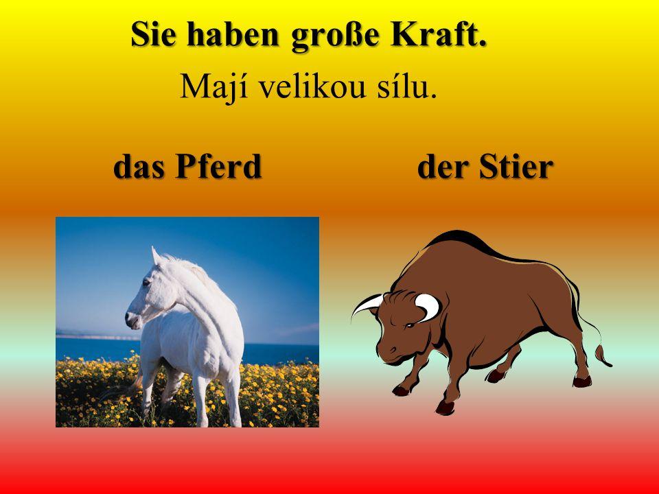 das Pferd der Stier Sie haben große Kraft. Mají velikou sílu.