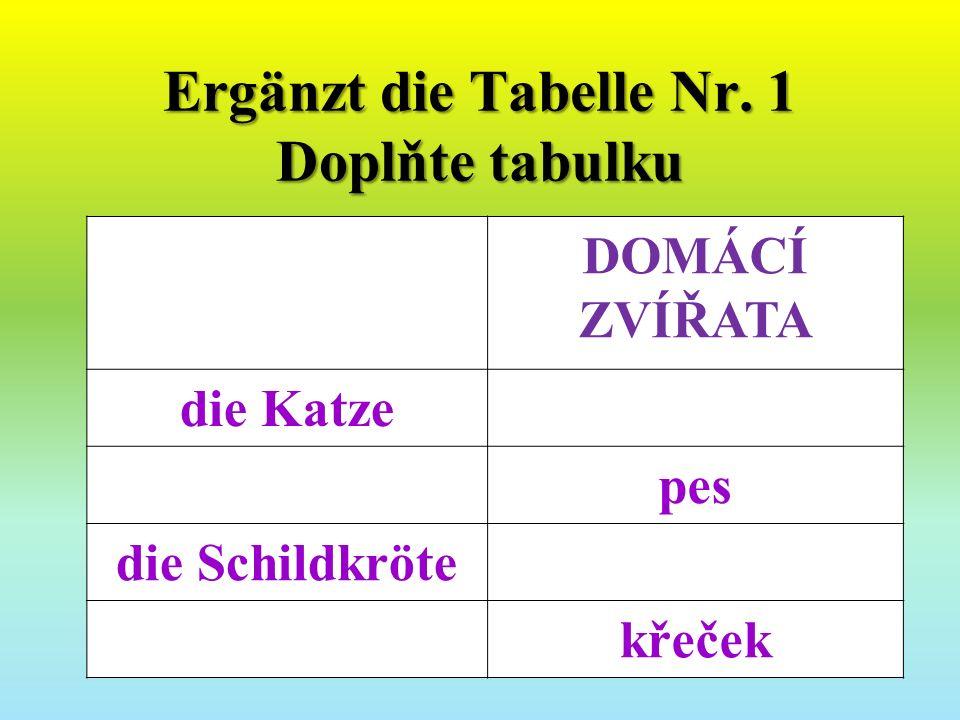 Ergänzt die Tabelle Nr. 1 Doplňte tabulku DOMÁCÍ ZVÍŘATA die Katze pes die Schildkröte křeček
