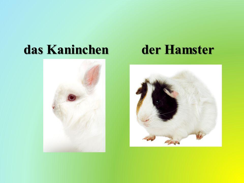 das Kaninchen der Hamster