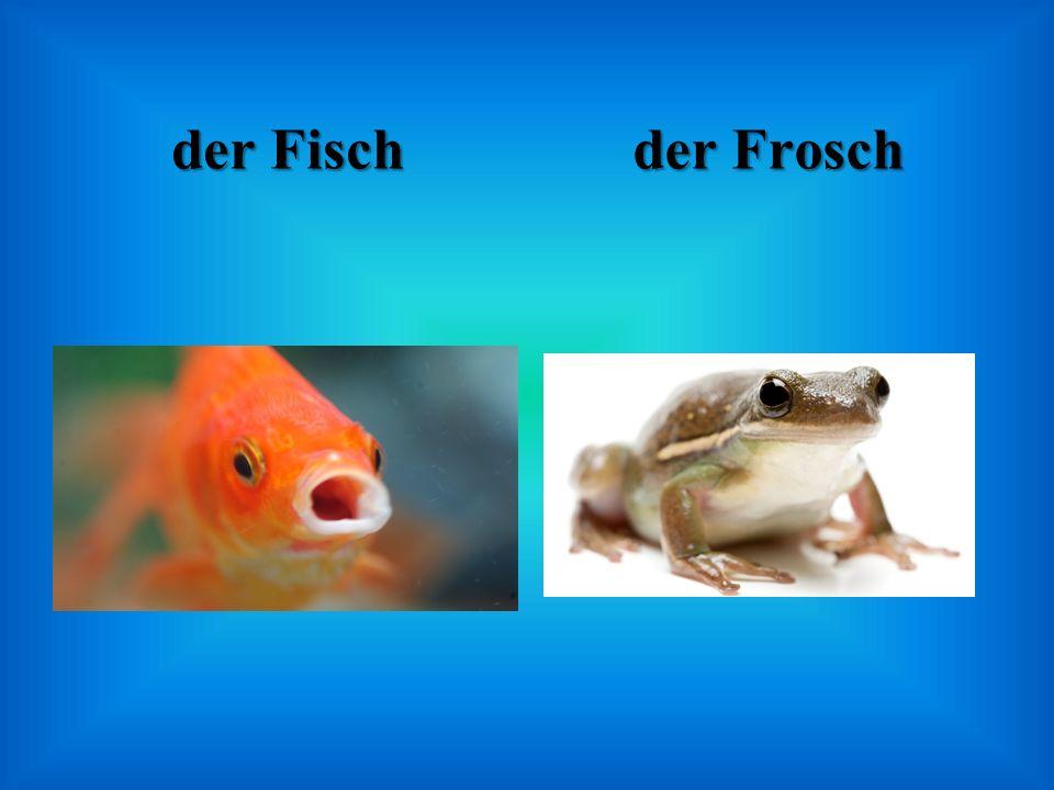 der Fisch der Frosch