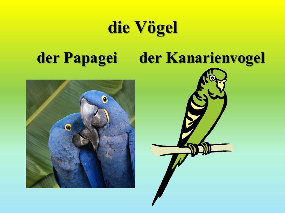die Vögel der Papagei der Kanarienvogel