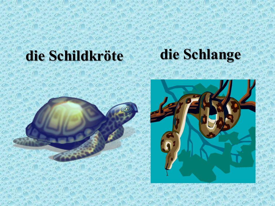 die Schildkröte die Schlange