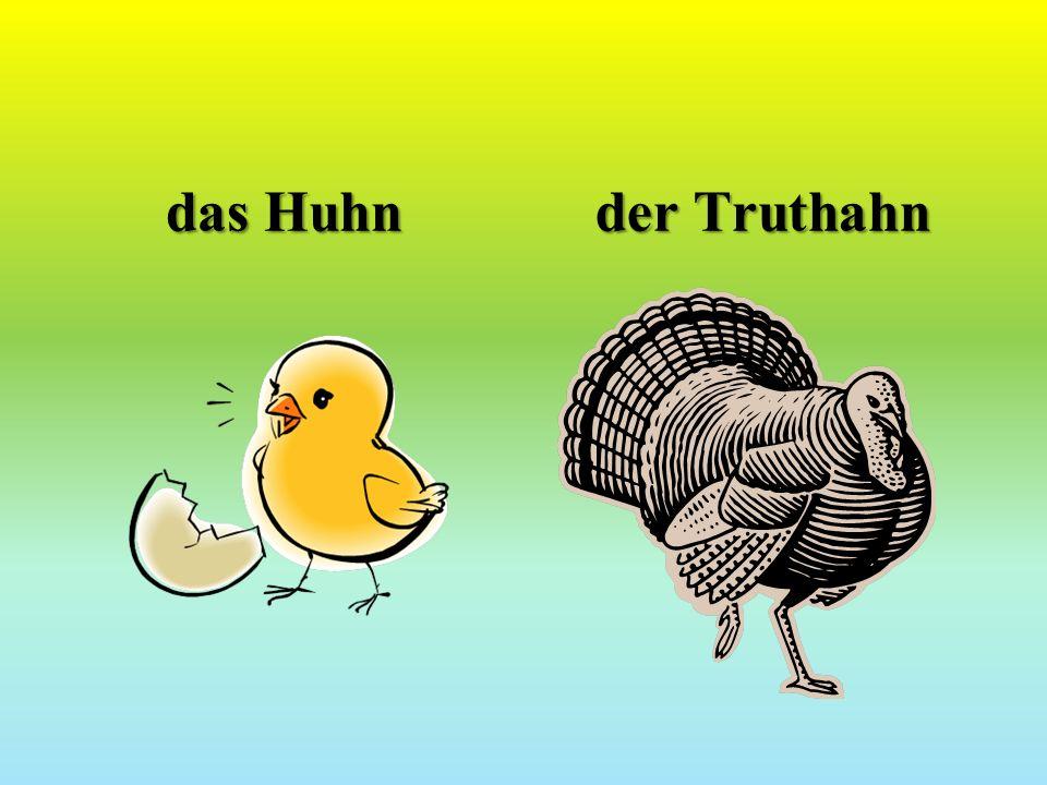 das Huhn der Truthahn