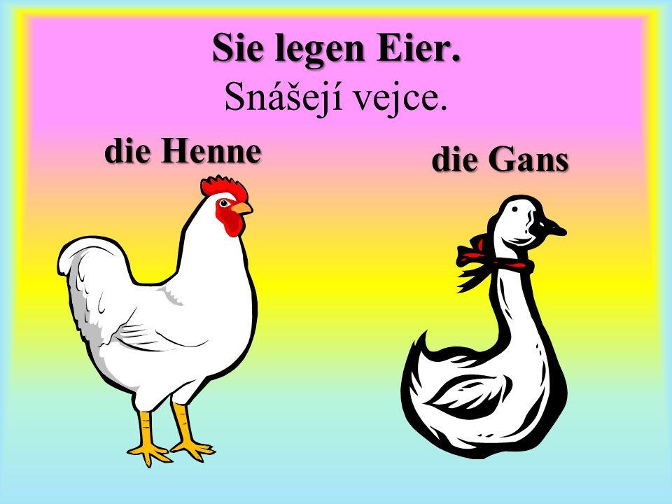 die Henne die Gans Sie legen Eier. Sie legen Eier. Snášejí vejce.