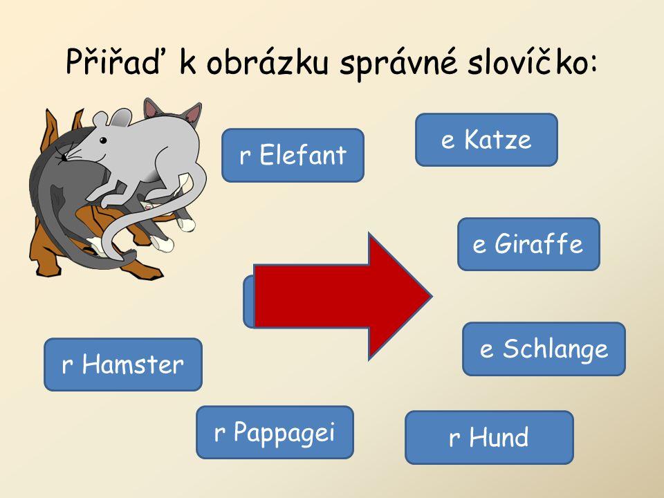 Přiřaď k obrázku správné slovíčko: r Elefant e Schlange r Pappagei e Giraffe r Hamster r Hund e Katze e Maus