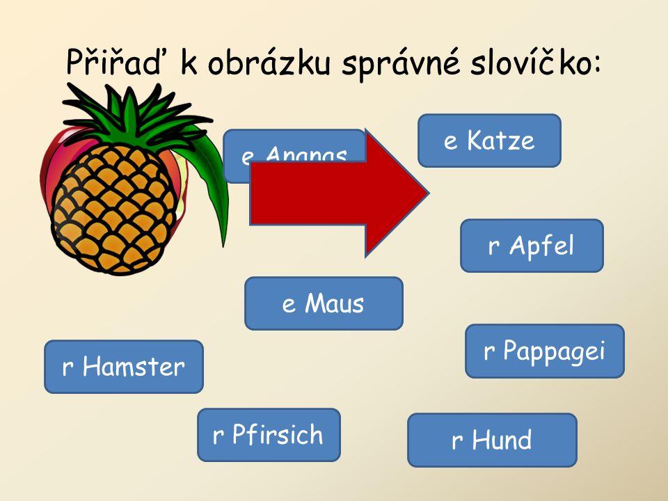 Přiřaď k obrázku správné slovíčko: r Pappagei r Hamster r Hund e Katze e Maus r Apfel r Pfirsich e Ananas