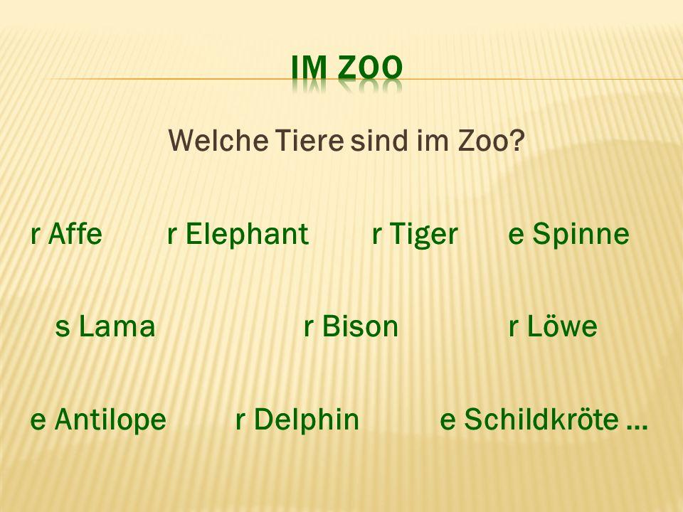 Welche Tiere sind im Zoo? r Affer Elephantr Tigere Spinne s Lamar Bisonr Löwe e Antiloper Delphine Schildkröte …