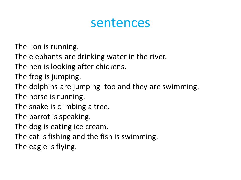 sentences The lion is running. The elephants are drinking water in the river.