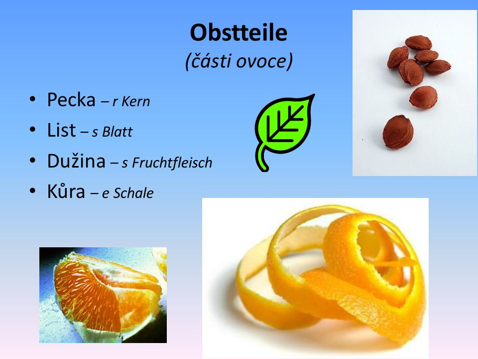 Obstteile (části ovoce) Pecka – r Kern List – s Blatt Dužina – s Fruchtfleisch Kůra – e Schale