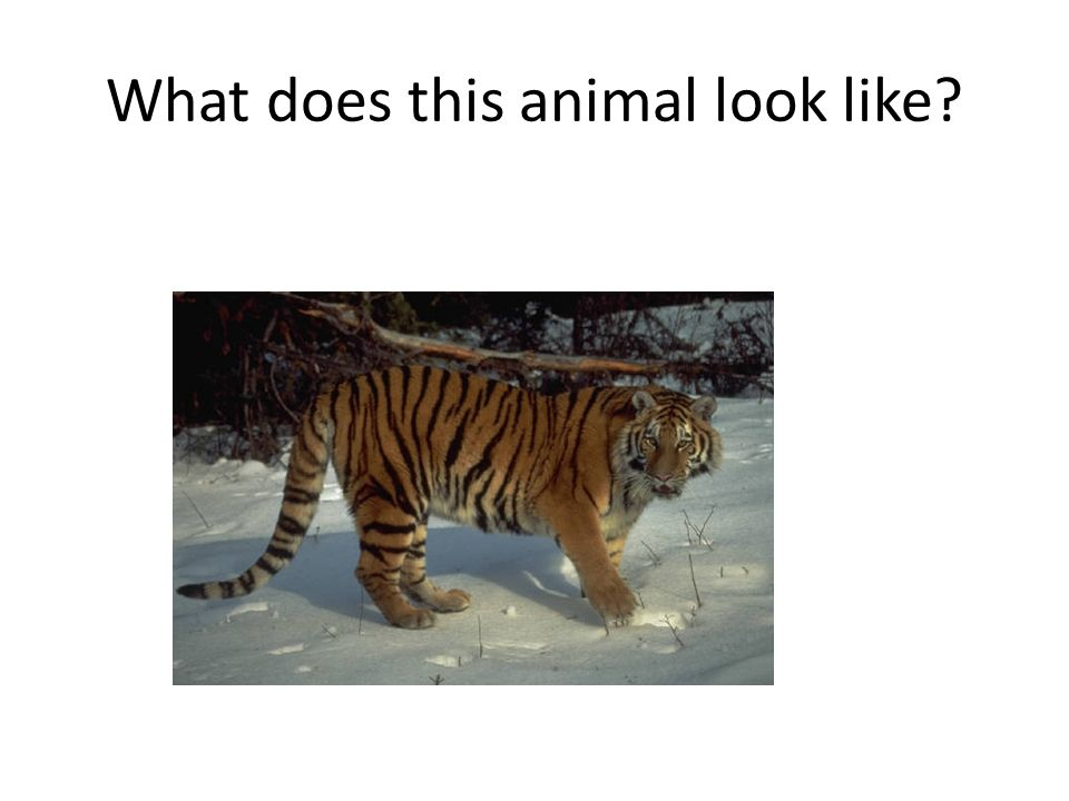 What does this animal look like