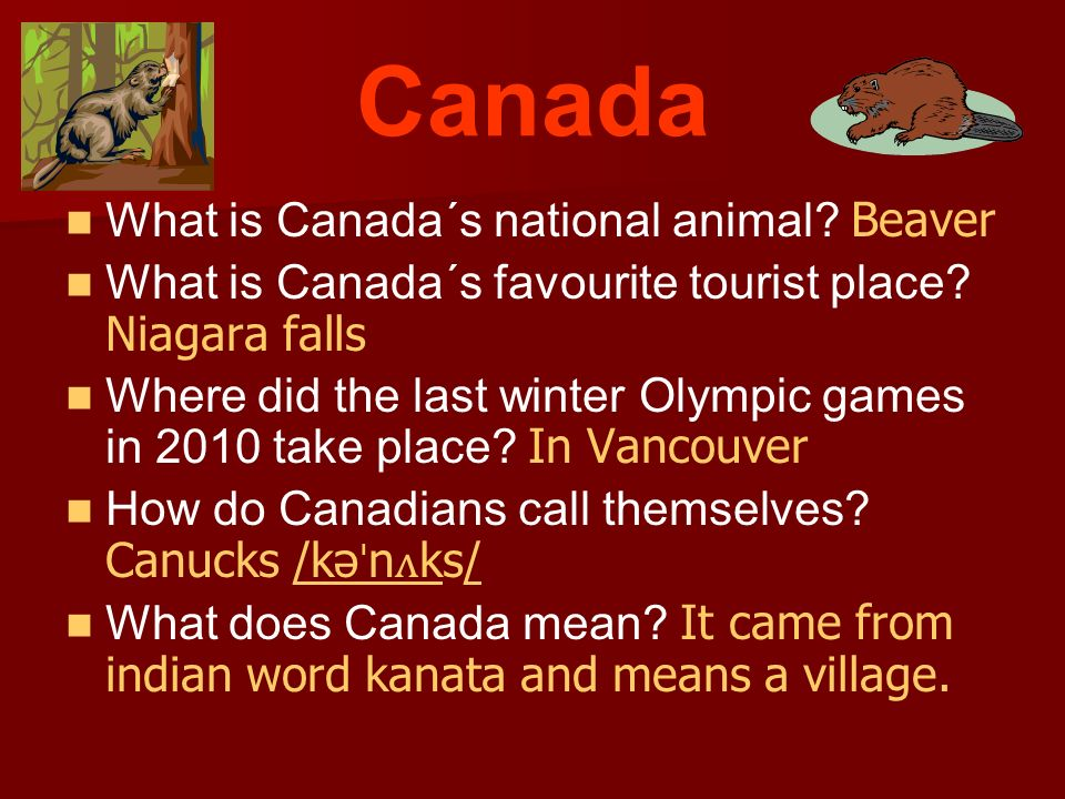 Canada What is Canada´s national animal.Beaver What is Canada´s favourite tourist place.