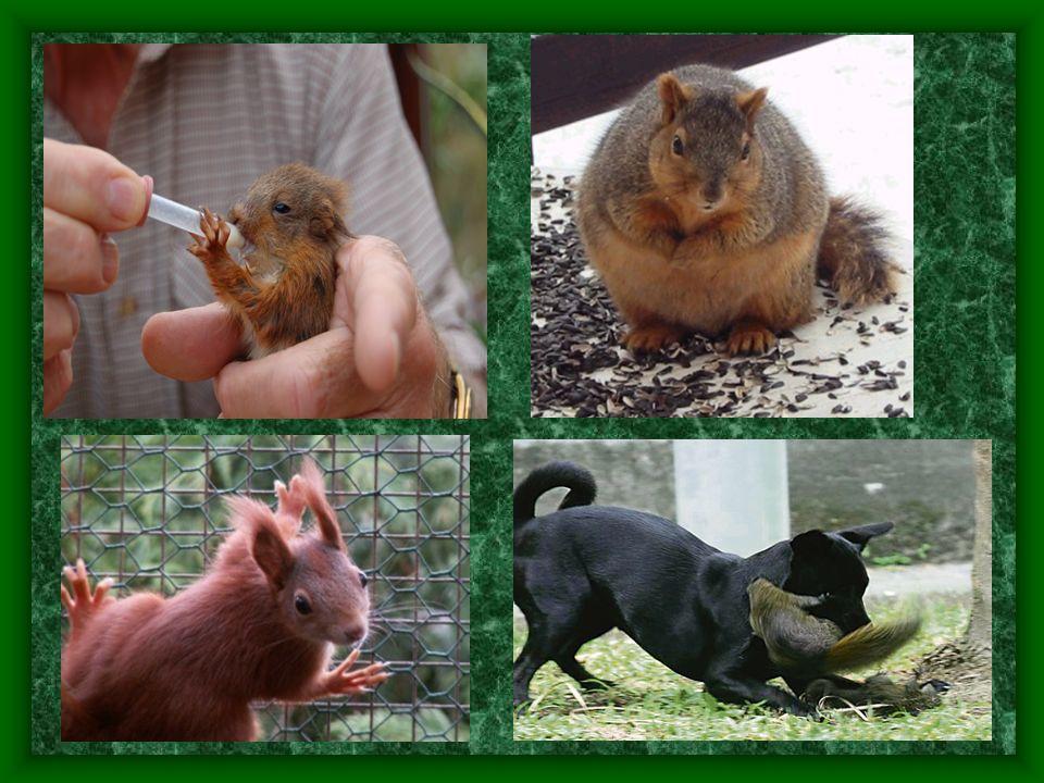 14 - ve většině států Evropy je chráněným druhem - to platí i v ČR, kde je v současnosti podle Zákonu 4.