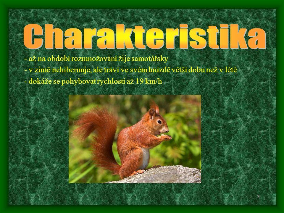 2 - zbarvení srsti je různé rezavé, hnědé nebo černé, spodní část těla je bílá - barva srsti má určitou souvislost s tím, kde veverka žije : červeno-hnědé zbarvení v listnatých lesích zatímco v jehličnatých lesích je černé - nepřehlédnutelný je její dlouhý chlupatý ocas, který používá i jako kormidlo při skákání z větve na větev, ocas bývá stejně dlouhý jako tělo samotné - líná dvakrát ročně; v létě je její srst krátká a na hřbetě žlutohnědá až téměř černá, v období od srpna do listopadu je letní srst nahrazena hustší a tmavší srstí zimní, v tomto období dochází k prodloužení štětiček na uších - délka těla je 195 - 290 mm, délka ocasu 140 - 240 mm - hmotnost je mezi 230 g – 500 g - v přírodě se dožívá 3 let, v zajetí to může být až 10 let