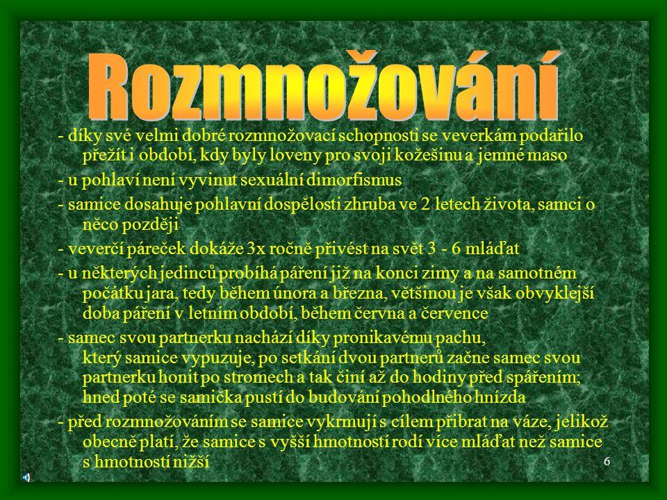 26 http://blog.northumbria-byways.com/2008/07/red-squirrels-in-northumberland.html http://www.bored.com/photos/fatsquirrel.html http://www.blesk.cz/clanek/zpravy-novinky-zajimavosti/127409/statecna-veverka- nech-si-zajit-chut-pejsanku.html http://www.naturfoto.cz http://is.muni.cz/do/rect/el/estud/prif/ps10/biogeogr/web/index_book_1-4-1.html http://battleoftheday.50webs.com/redsquirrelvsstoat.html http://www.partnersinrhyme.com/soundfx/animals/TreeAnimals.shtml http://www.ilovewavs.com/Effects/Animals/Animals.htm http://www.wyomingwebdesign.com/files/pages/free_sound_files.html http://www.ftipky.org/vtipy/zvirata/1349_jednou-rano-se-veverka-probudi.html http://www.komik.cz/videa/970-veverci-profesional/ http://tn.nova.cz/magazin/historie/novinky/veverky-novy-nepritel-americkeho- letectva.html http://www.lidovky.cz/veverky-jsou-chutne-tvrdi-americky-lovec-dusenou-by- nabidl-i-kralovne-1eo-/dobra-chut.asp?c=A101129_182308_dobra-chut_pks http://www.tyden.cz/rubriky/veda/priroda/veverka-adoptovala-cizi-mlade-vi-co- dela_171266.html