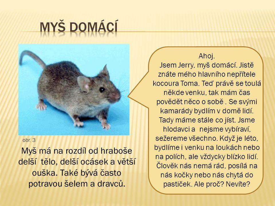 Ahoj. Jsem Jerry, myš domácí. Jistě znáte mého hlavního nepřítele kocoura Toma.