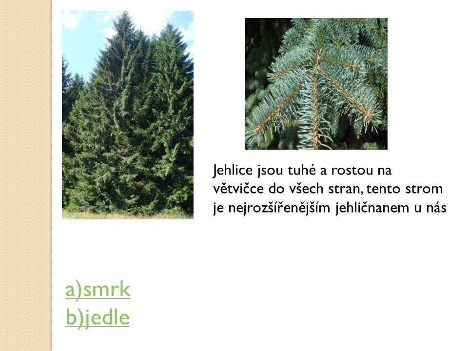 Jehlice jsou tuhé a rostou na větvičce do všech stran, tento strom je nejrozšířenějším jehličnanem u nás a)smrk b)jedle