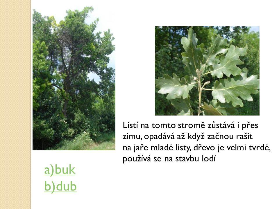 Listí na tomto stromě zůstává i přes zimu, opadává až když začnou rašit na jaře mladé listy, dřevo je velmi tvrdé, používá se na stavbu lodí a)buk b)d