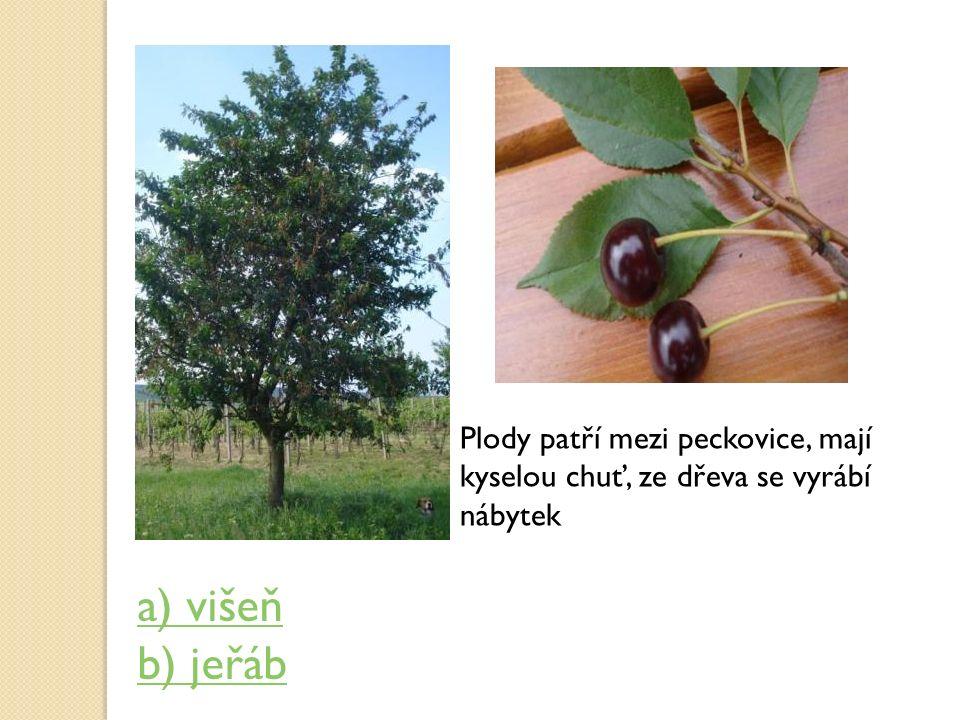 Plody patří mezi peckovice, mají kyselou chuť, ze dřeva se vyrábí nábytek a) višeň b) jeřáb
