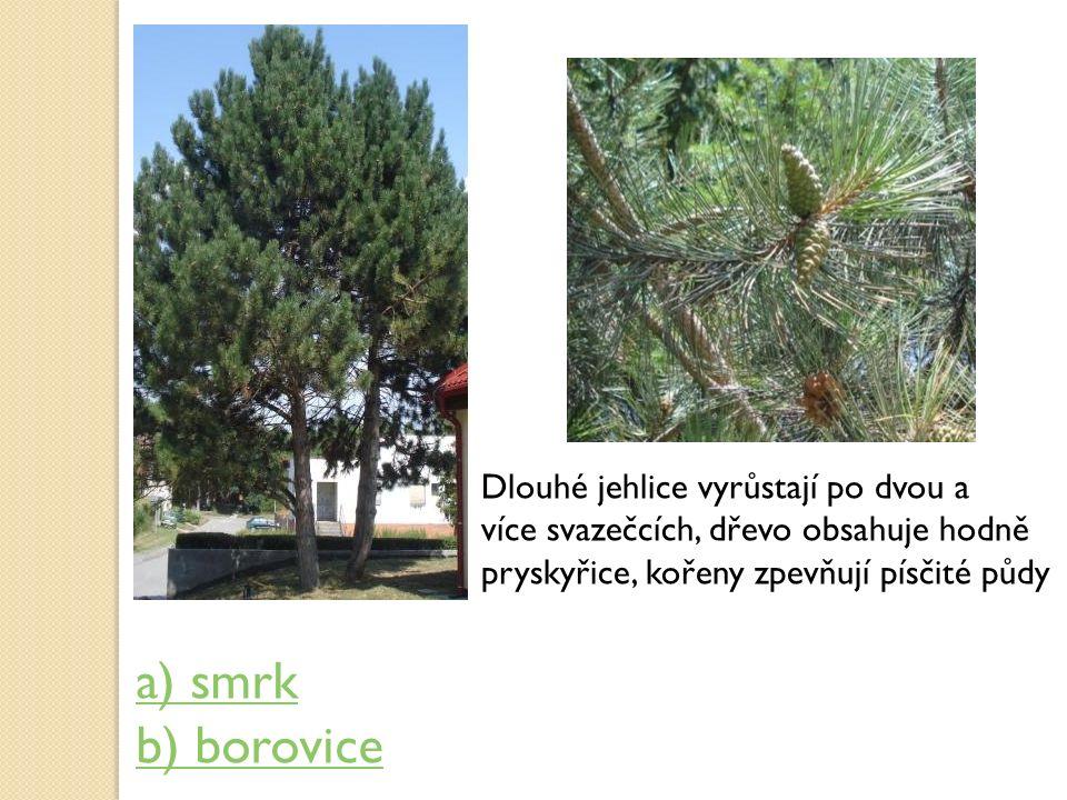 Dlouhé jehlice vyrůstají po dvou a více svazečcích, dřevo obsahuje hodně pryskyřice, kořeny zpevňují písčité půdy a) smrk b) borovice