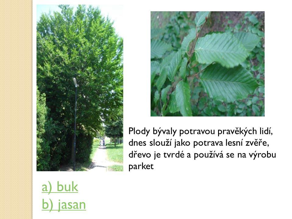 Plody bývaly potravou pravěkých lidí, dnes slouží jako potrava lesní zvěře, dřevo je tvrdé a používá se na výrobu parket a) buk b) jasan