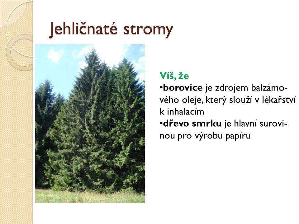 Jehličnaté stromy Víš, že borovice je zdrojem balzámo- vého oleje, který slouží v lékařství k inhalacím dřevo smrku je hlavní surovi- nou pro výrobu p