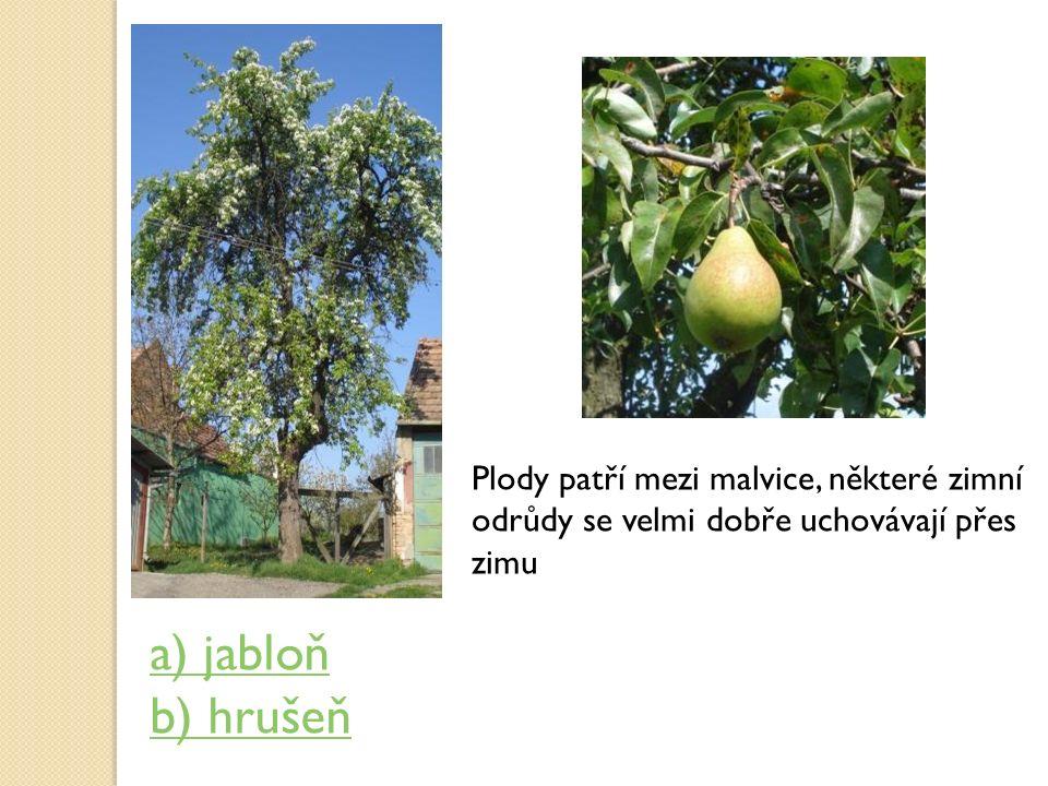 Plody patří mezi malvice, některé zimní odrůdy se velmi dobře uchovávají přes zimu a) jabloň b) hrušeň