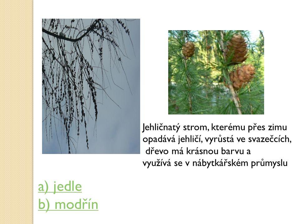 Jehličnatý strom, kterému přes zimu opadává jehličí, vyrůstá ve svazečcích, dřevo má krásnou barvu a využívá se v nábytkářském průmyslu a) jedle b) mo