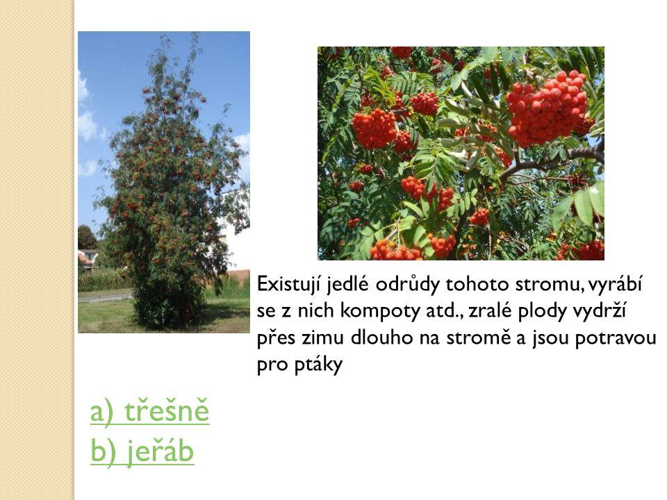 Existují jedlé odrůdy tohoto stromu, vyrábí se z nich kompoty atd., zralé plody vydrží přes zimu dlouho na stromě a jsou potravou pro ptáky a) třešně